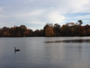 two(ish) weeks out: easy run in prospect park